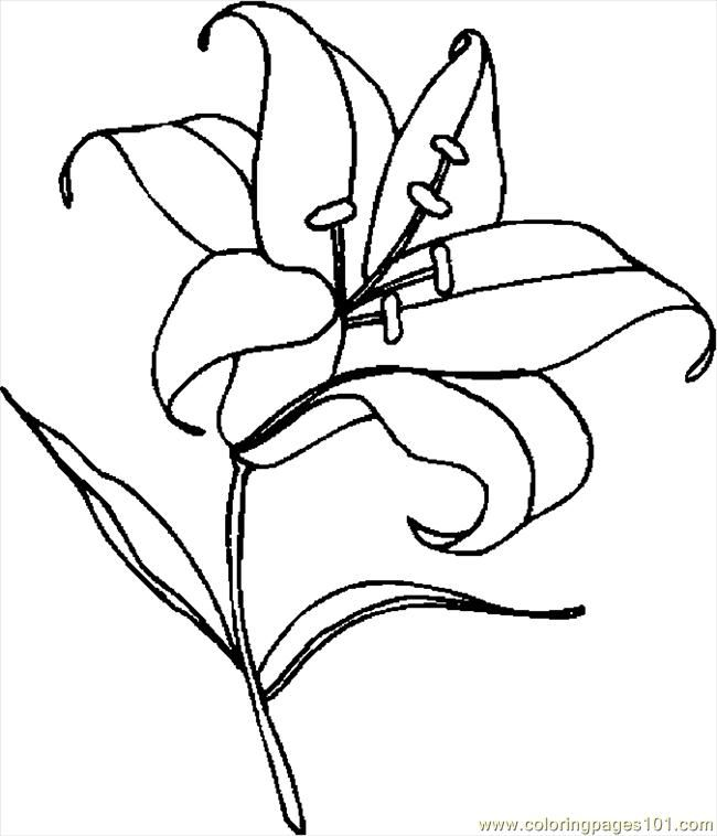 Basic shapes coloring pages coloring home for Lily flower coloring pages