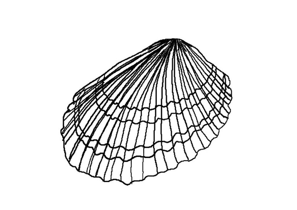 Downloadable Seashell Coloring Pages Kids | Laptopezine.