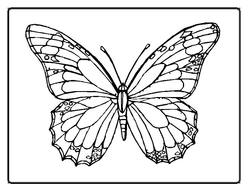 Butterfly Template Printable AZ Coloring Pages