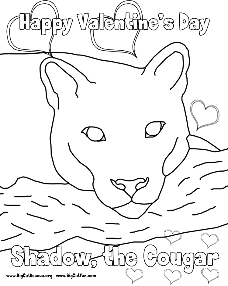 Cougar pictures to print coloring home for Cougar coloring pages