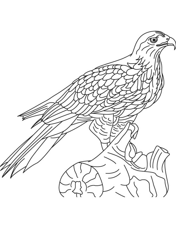 Red tailed hawk coloring page coloring home for Red tailed hawk coloring page