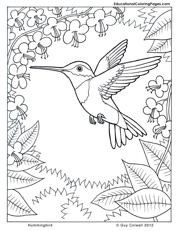 Colouring Pages Nature - Coloring Home