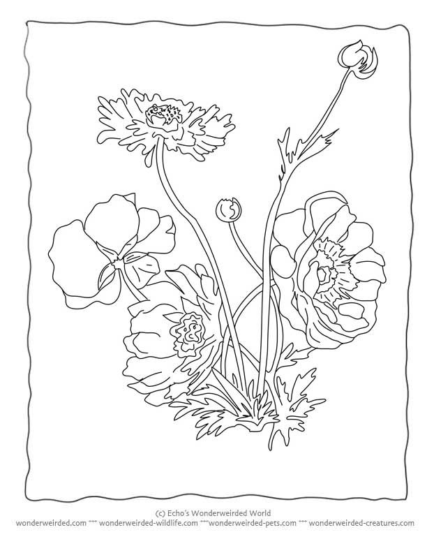 Realistic Bouquet of flowers in vase coloring page for kids ... | 792x612