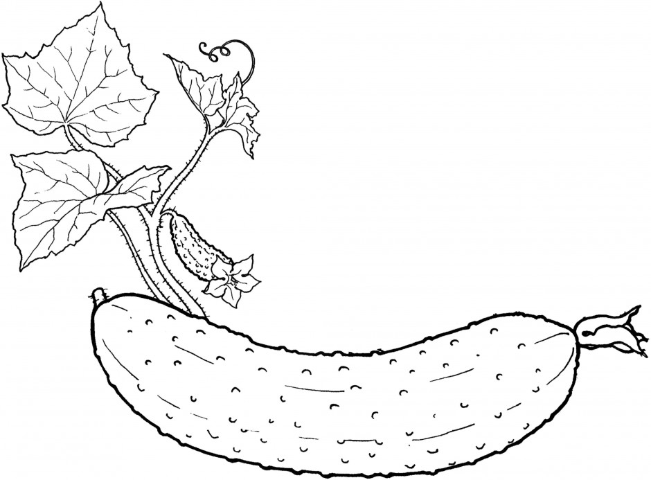 Line Art Vegetables : Free pictures of fruits and vegetables az coloring pages