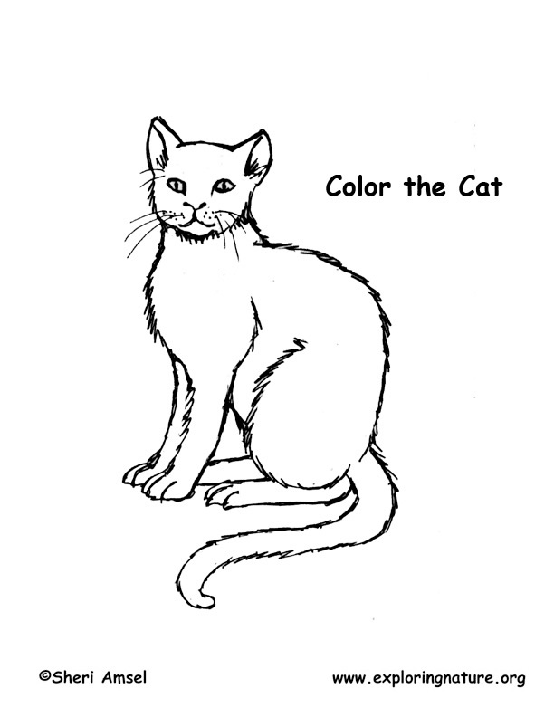Pbs Nature Cat Coloring Pages Coloring