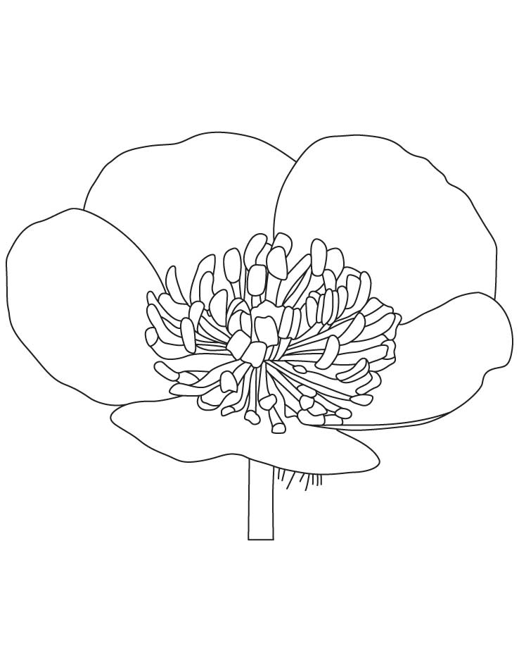Lotus flower coloring page coloring home for Buttercup flower coloring pages