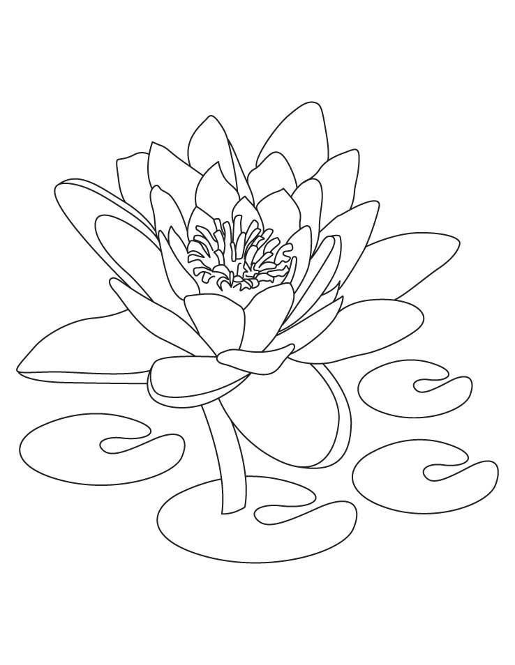 Lotus means symbol of purity coloring pages | Download Free Lotus