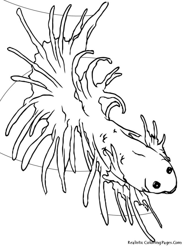 Tropical Fish Coloring Page - AZ Coloring Pages