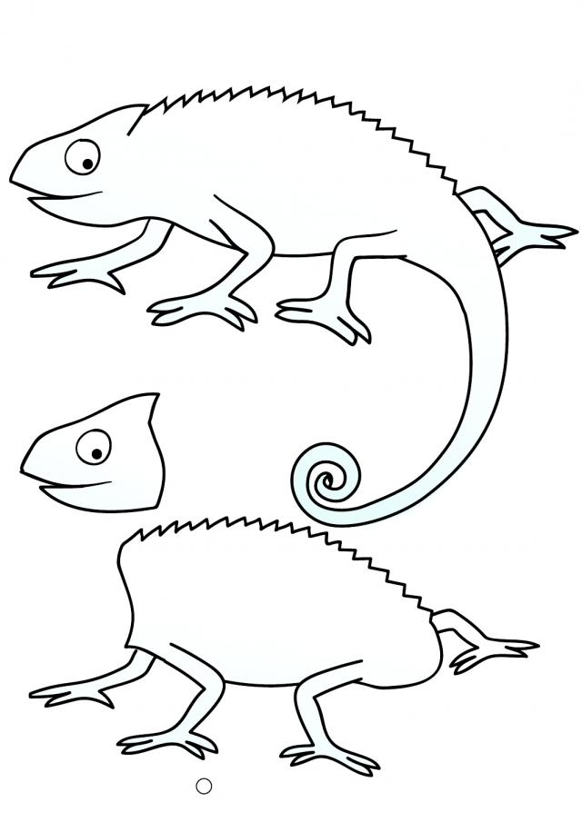 chameleon coloring pages chameleon coloring pages to print 162140 - Chameleon Coloring Pages Print