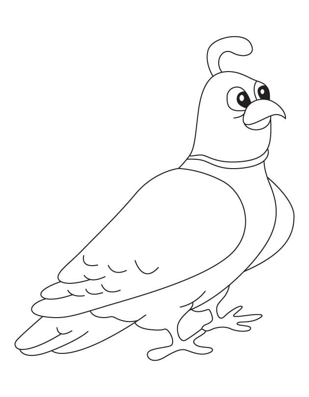 Mountain quail coloring page   Download Free Mountain quailQuail Coloring Page
