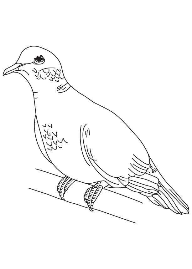 turtle dove template - dove coloring page coloring home