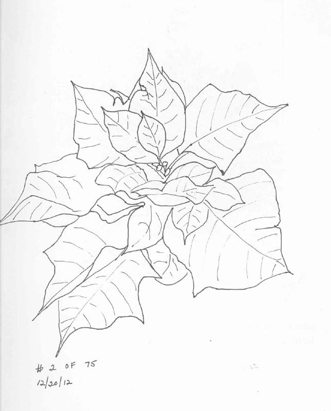 picture of a poinsettia coloring home
