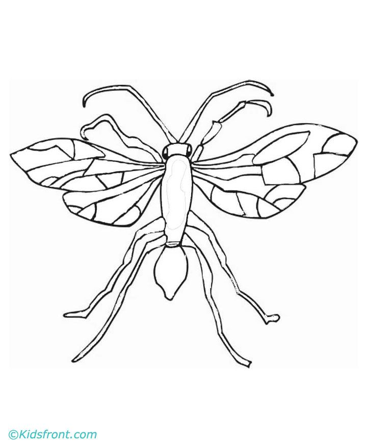 Free Coloring Pages Of Mascot Yellow Jacket Yellow Jacket Coloring Page