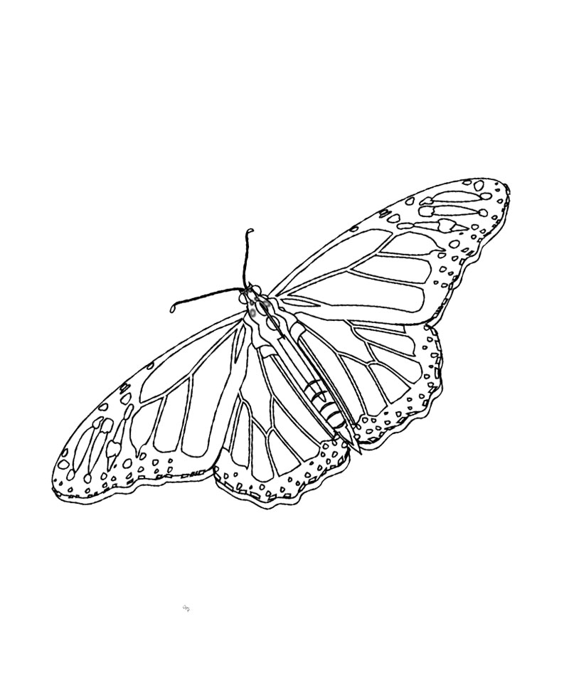 Monarch Butterfly Coloring Page Az Coloring Pages Monarch Coloring Page