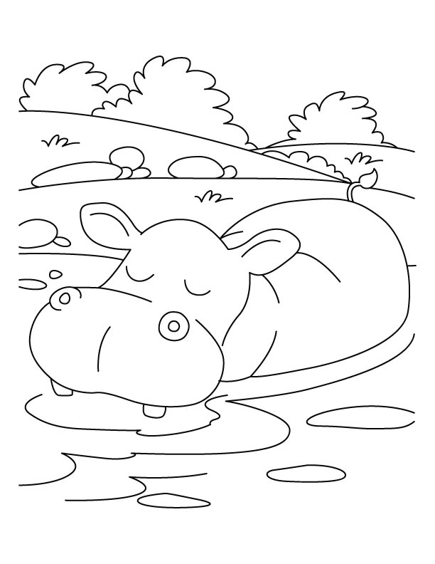 Picture Of A Hippopotamus