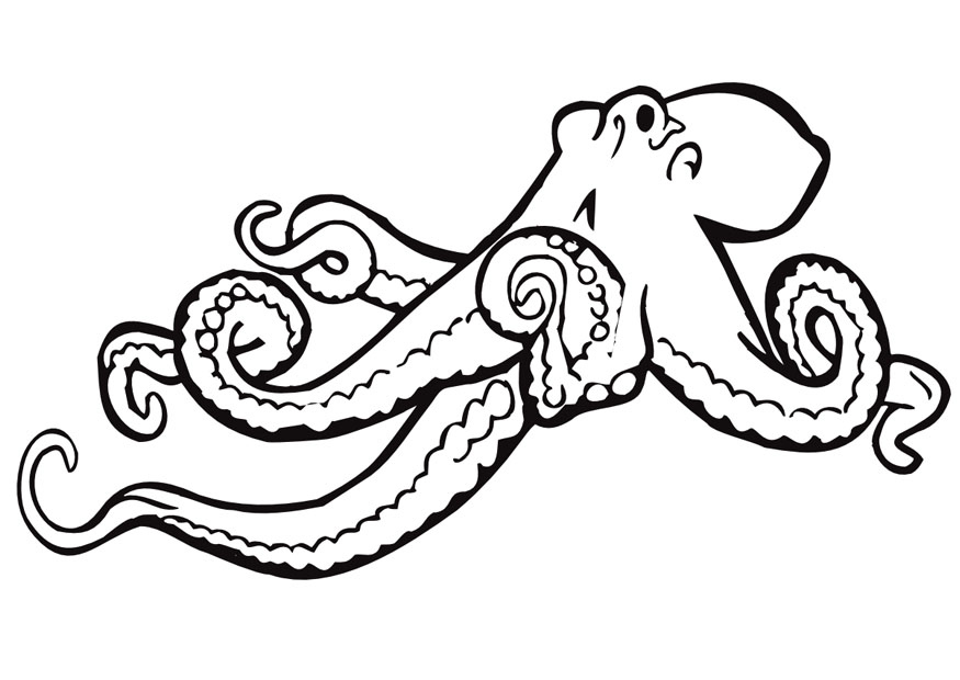 Octopus Coloring Pages For Kids Az Coloring Pages