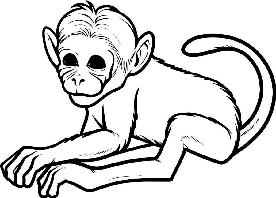 Baby Monkey Coloring Pages Printable Sheet Anbu
