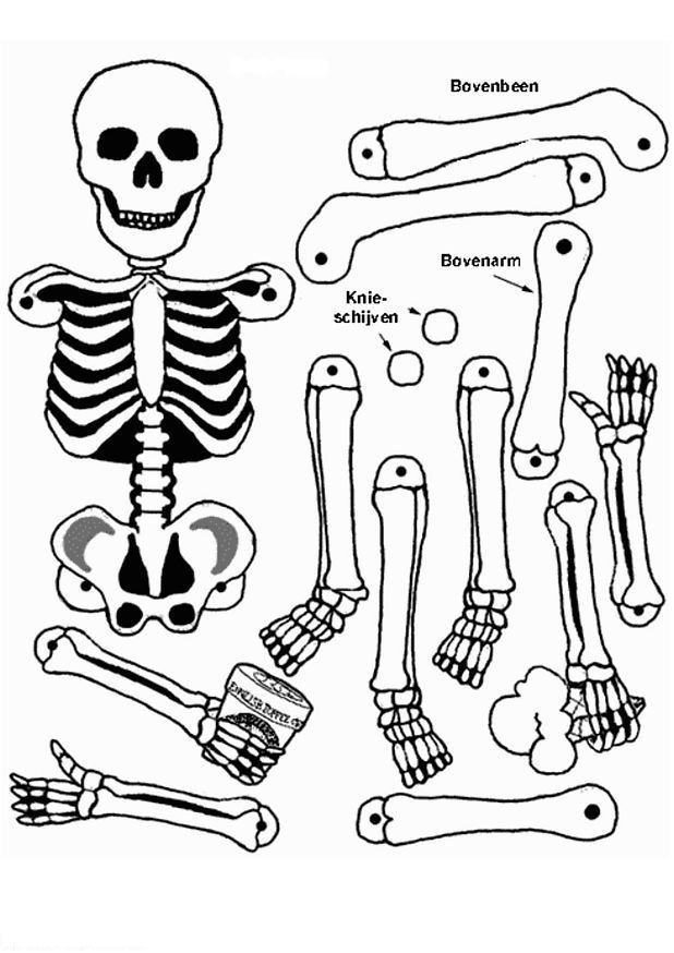 Coloring Pictures Of Skeleton 118