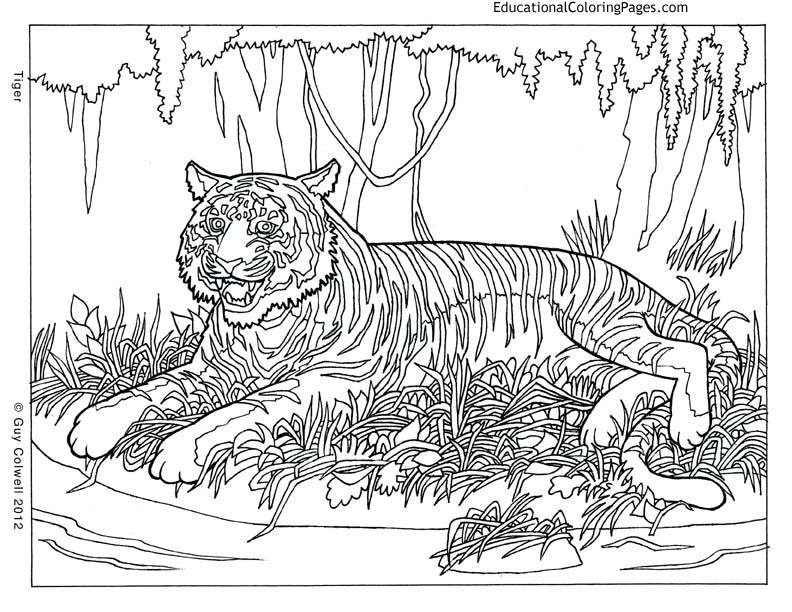 adult coloring pages of animals-#35