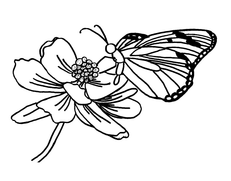 butterfly and flower coloring pages - photo#30