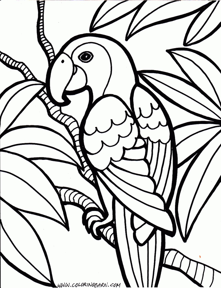 coloring pages pirate parrot - photo#33