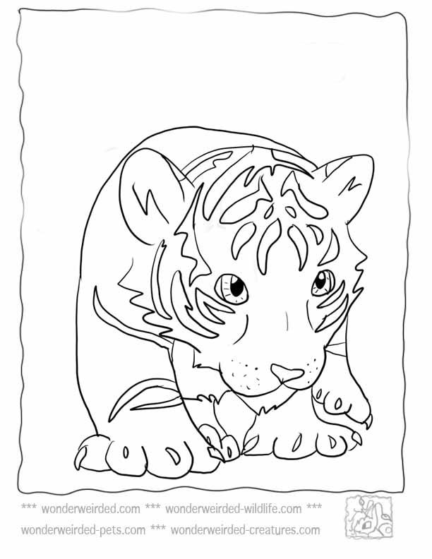 tiger color page az coloring pages