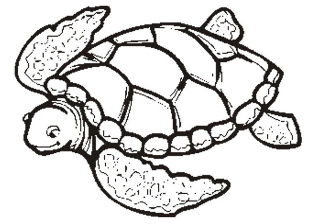 sea turtle coloring page free coloring pages for kidsfree