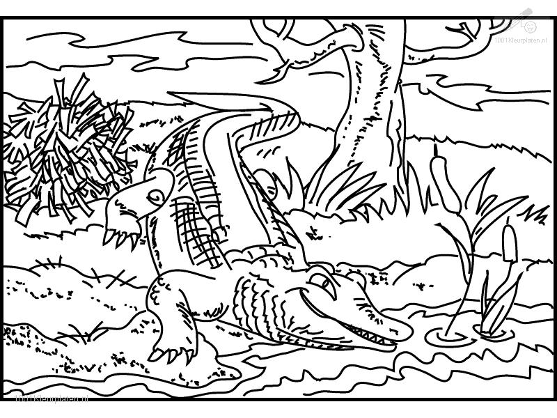 Coloring Pages Swamp Animals : Crocodile coloring page home
