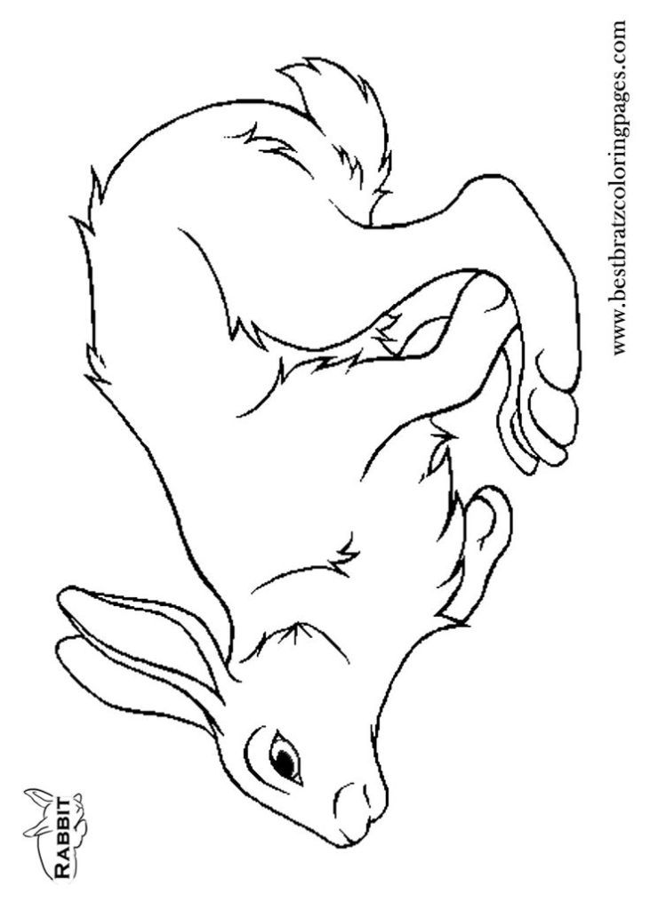 Dolphin Coloring Pages Pdf : Coloring pages dolphins free for kids