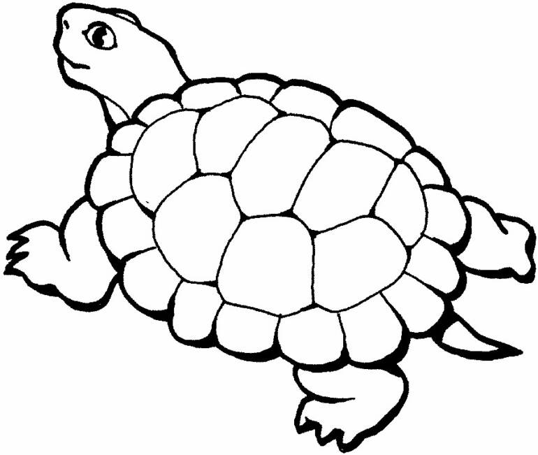 mommy turtle coloring pages - photo#28