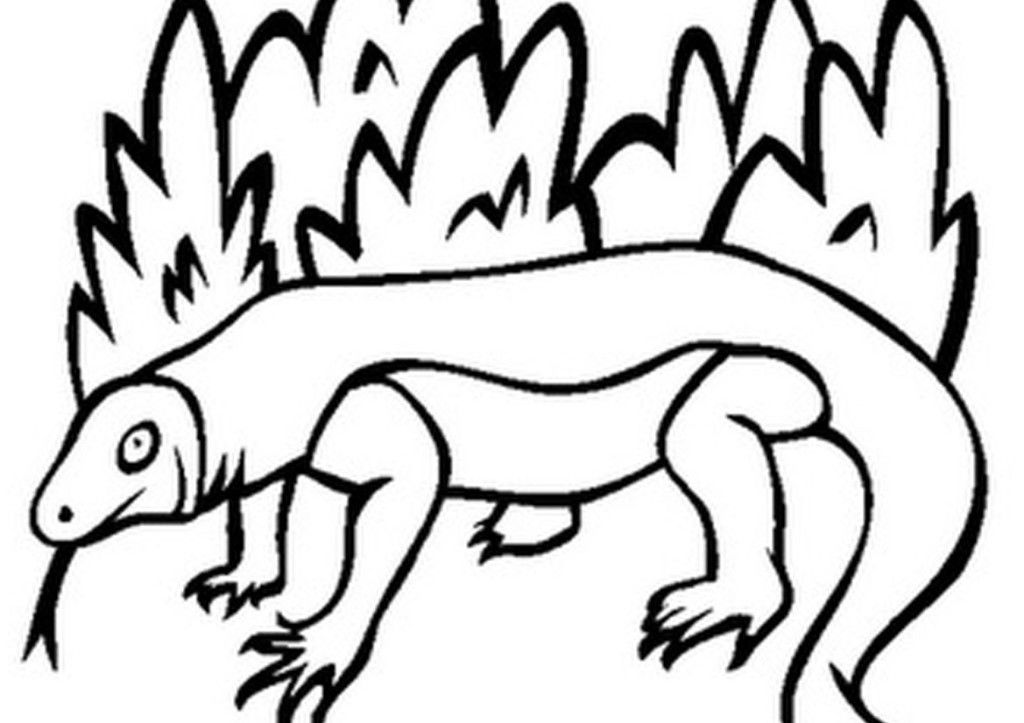 Komodo Dragon Coloring Pages Coloring Home