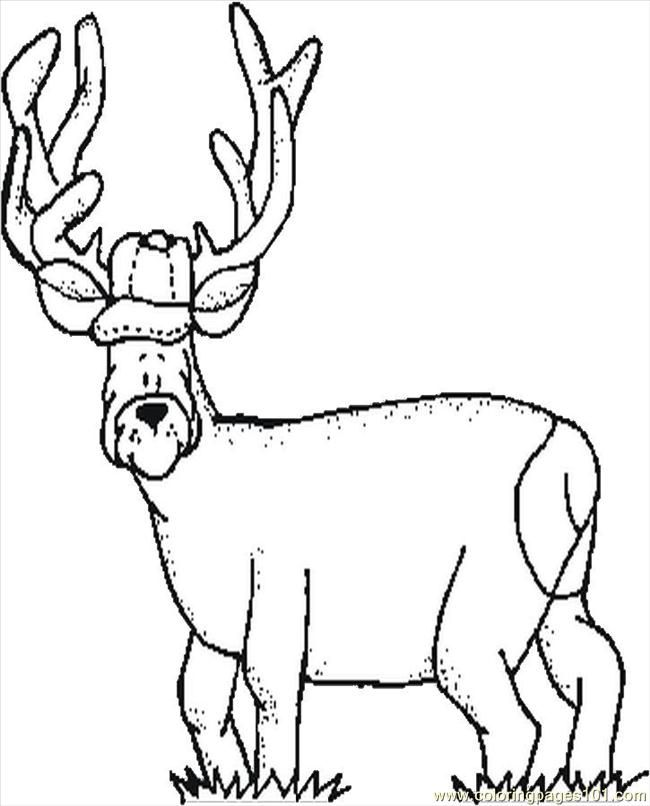 Deer Pictures To Color