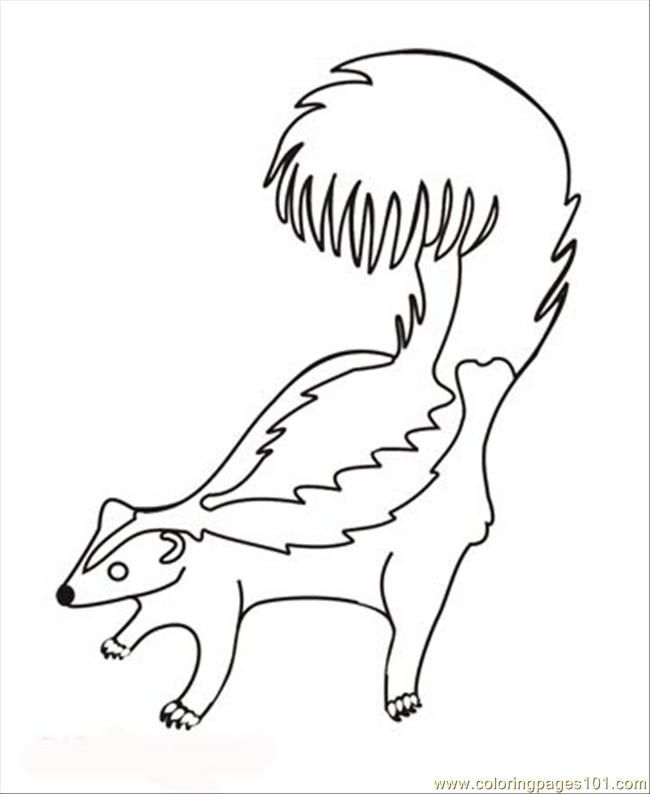 Coloring Pages 29 Skunk (Animals > Mammals) - free printable