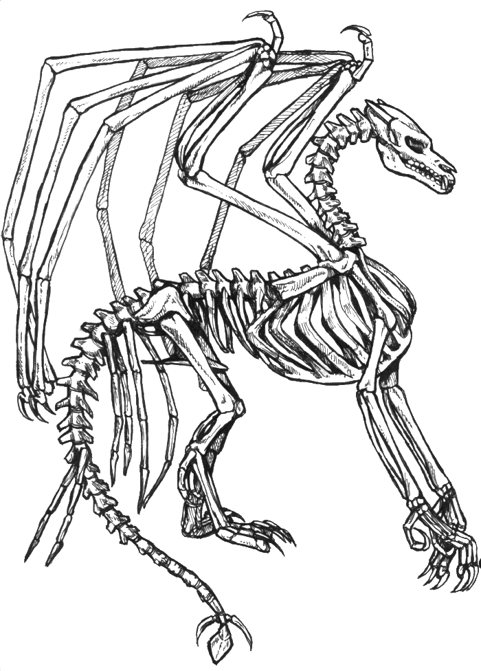 Skeleton coloring pages kids coloring home for Skeleton coloring pages