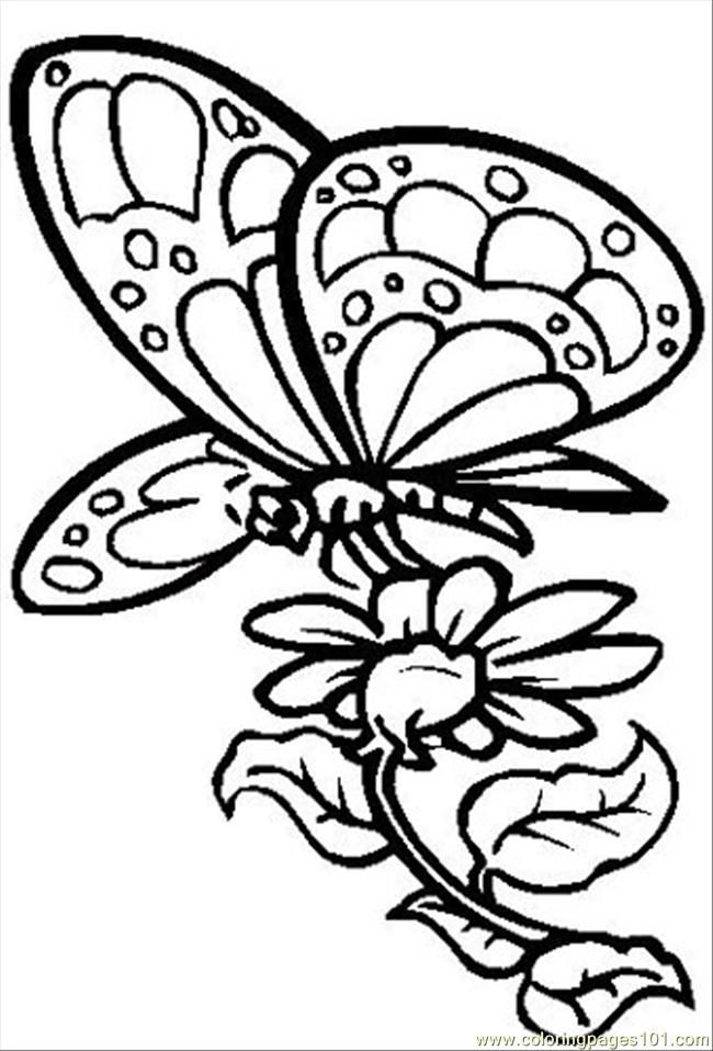 coloring pages flowers butterflies coloring home