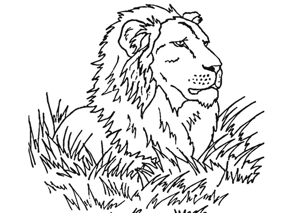 Coloring Pages Animals Realistic : Realistic animal coloring pages az