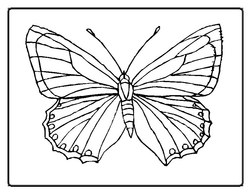 coloring pages painted lady butterfly - photo#16