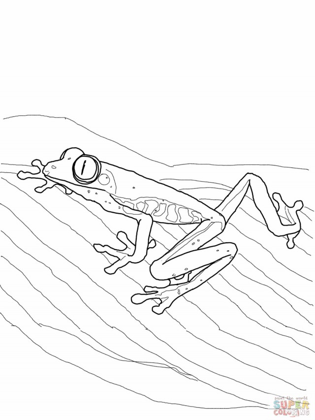 Tree Frog Coloring Pages AZ Coloring