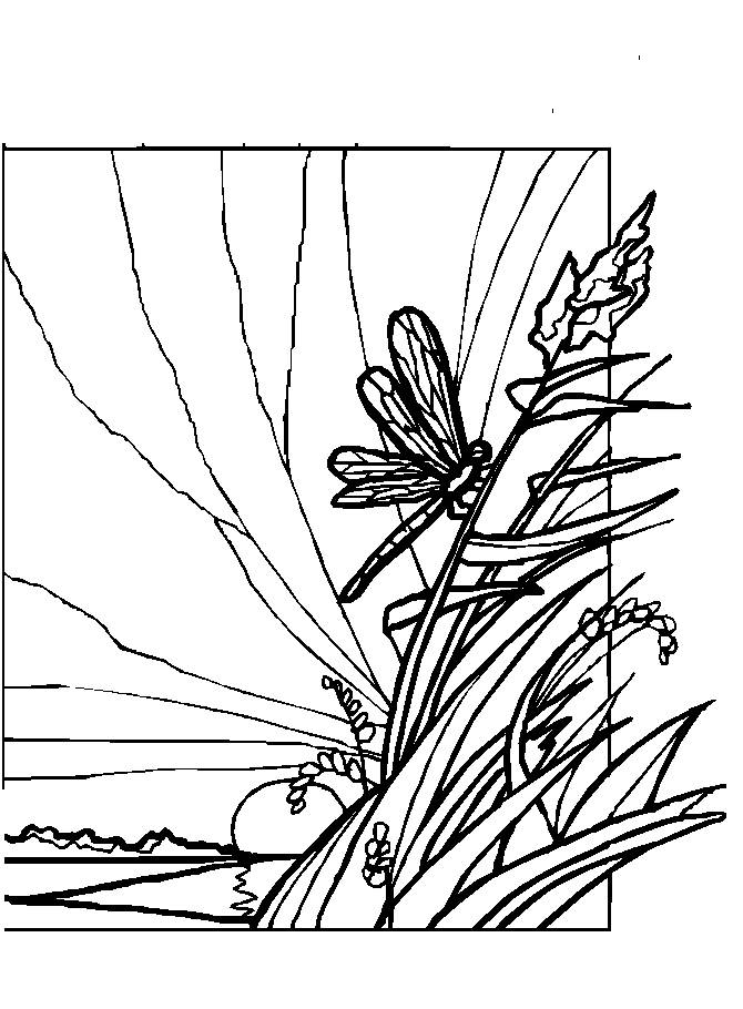 dragonfly pictures coloring pages - photo#44