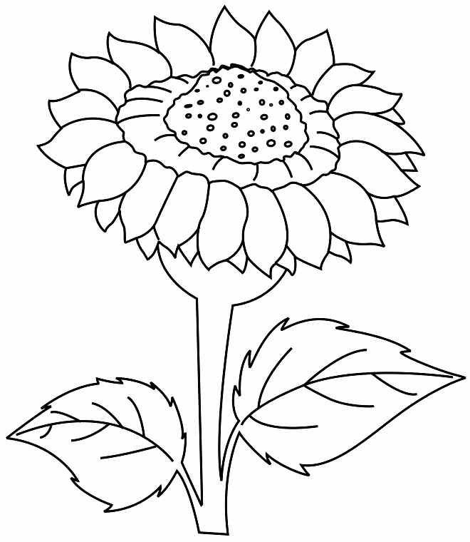 sunflower coloring pictures az coloring pages