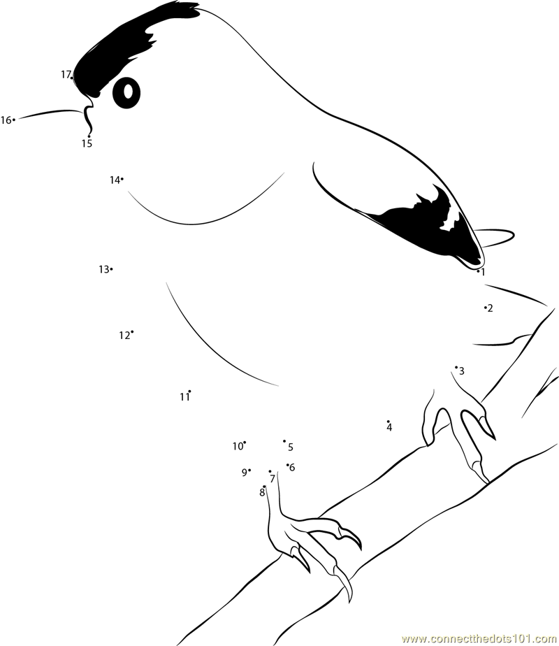 Connect The Dots Male American Goldfinch Birds Mountain Bluebird Coloring Page