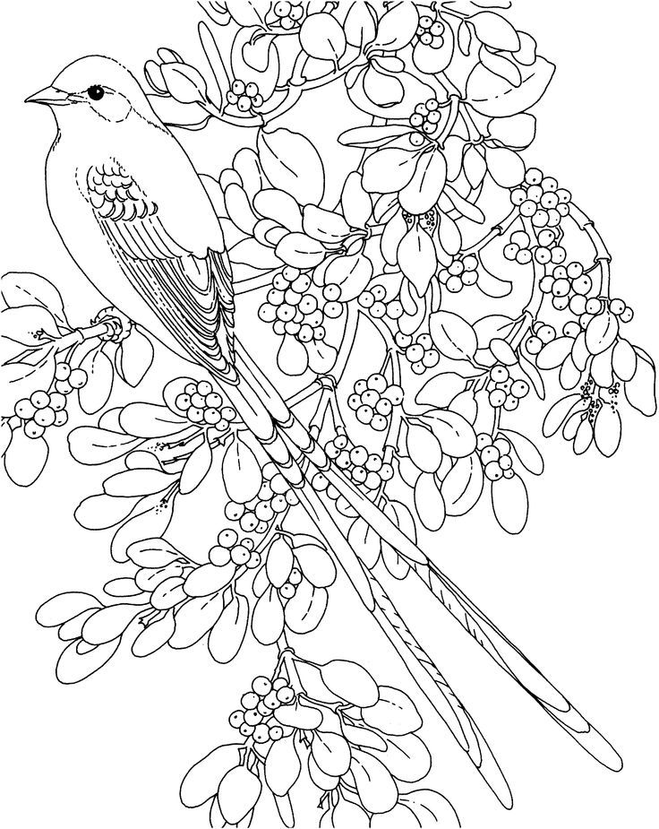 arizona state bird coloring page - oklahoma state bird and flower az coloring pages