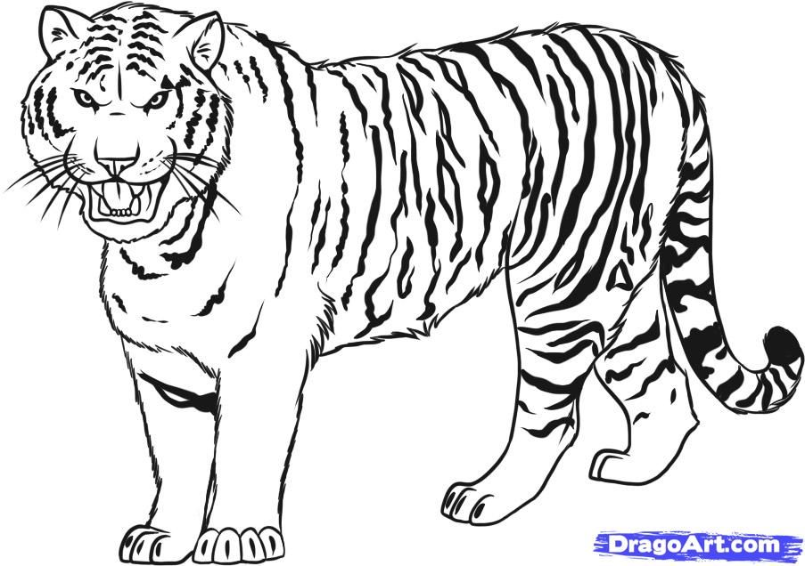 Bengal Tiger Coloring Page 14 | Free Coloring Page Site