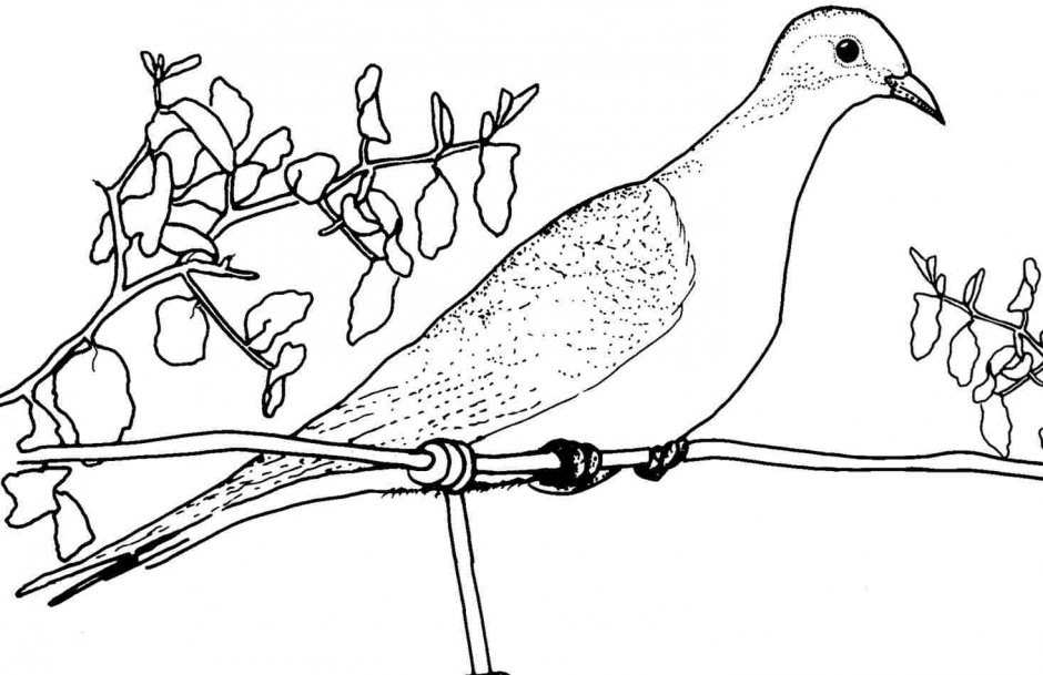 Free Coloring Pages Of Charlottes Web Charlottes Web Coloring Pages