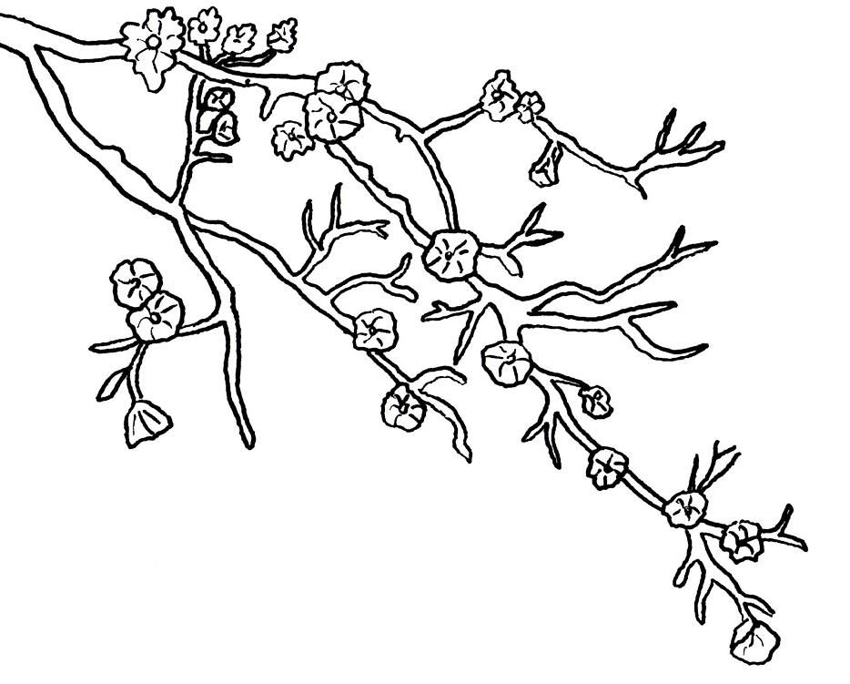 best cherry blossom tree coloring pages photos - printable ... - Cherry Blossom Tree Coloring Pages
