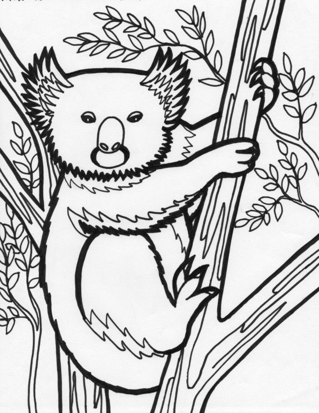 Koala Free Coloring Sheet | Coloring Pages