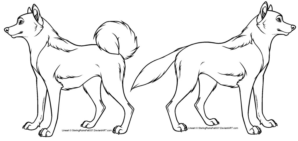 how to draw a cartoon dog wolf