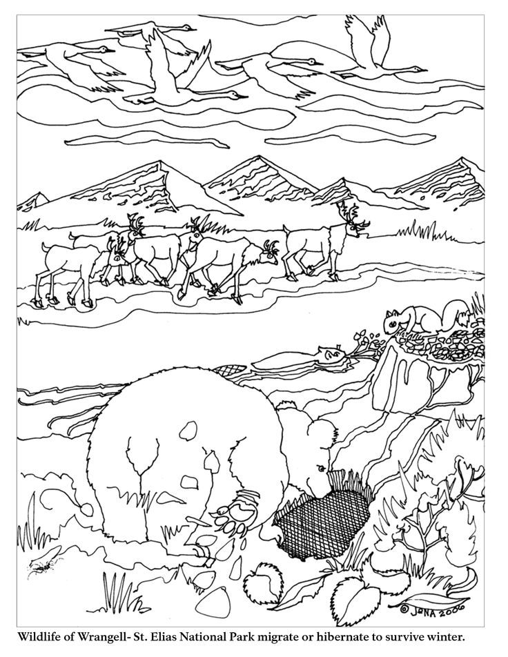 Hibernation Coloring Pages