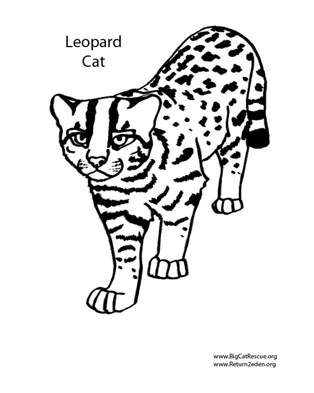 Big Cats Coloring Pages Az Coloring Pages Big Cats Coloring Pages
