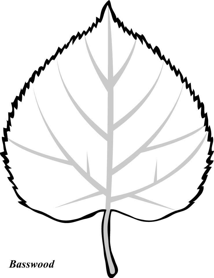 how to draw a big leaf